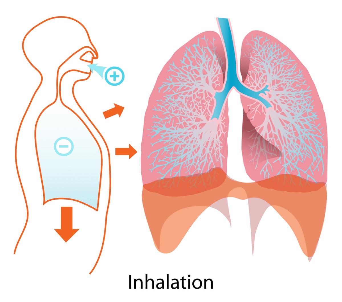 Ces 4 Aliments Qui Nettoient Naturellement Vos Poumons