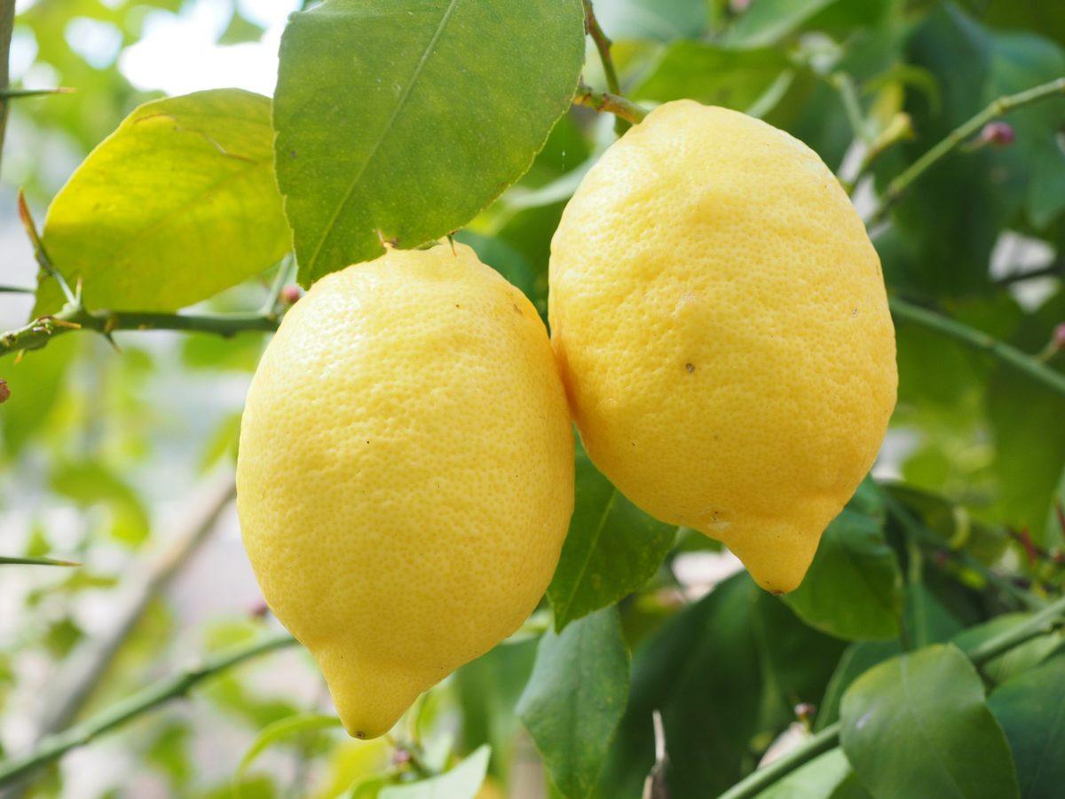 citron pixabay