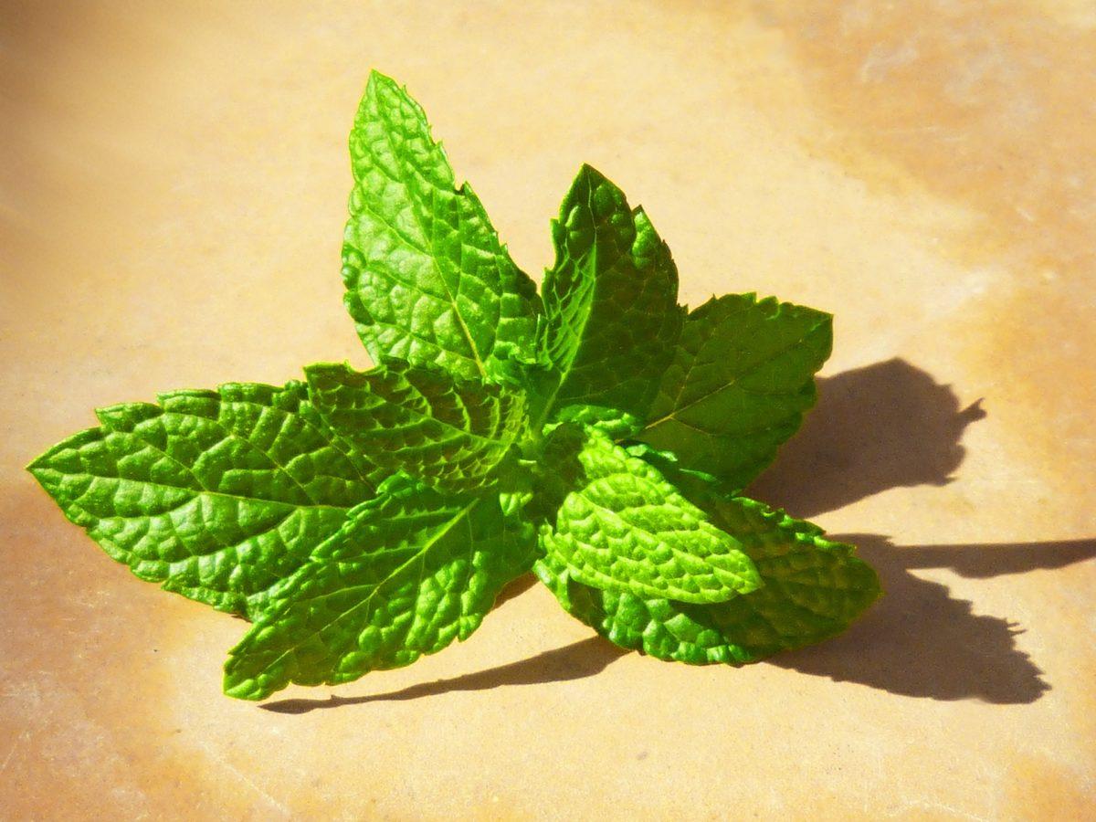 6 rem des naturels pour soulager les piq res de gu pes et de frelons docteur tamalou - Soulager une piqure de guepe ...