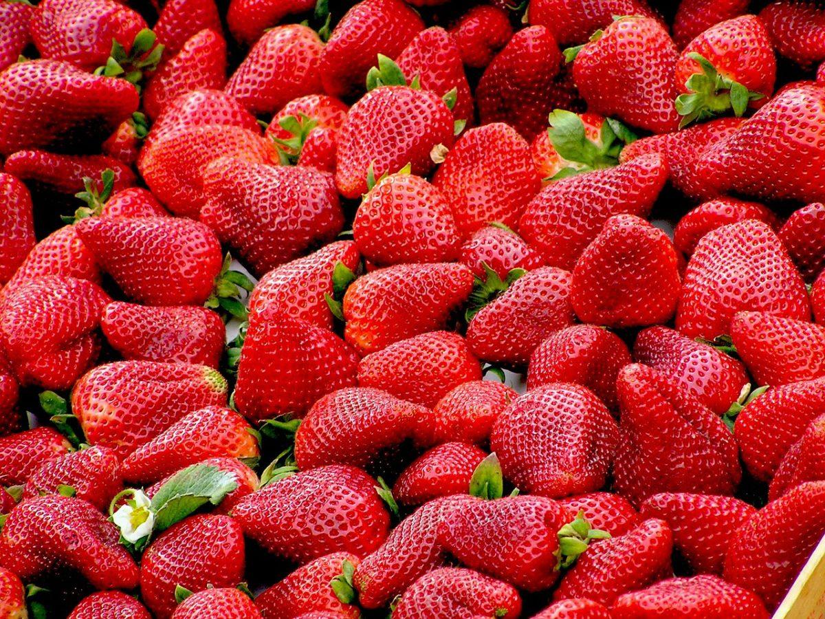fraises pixabay