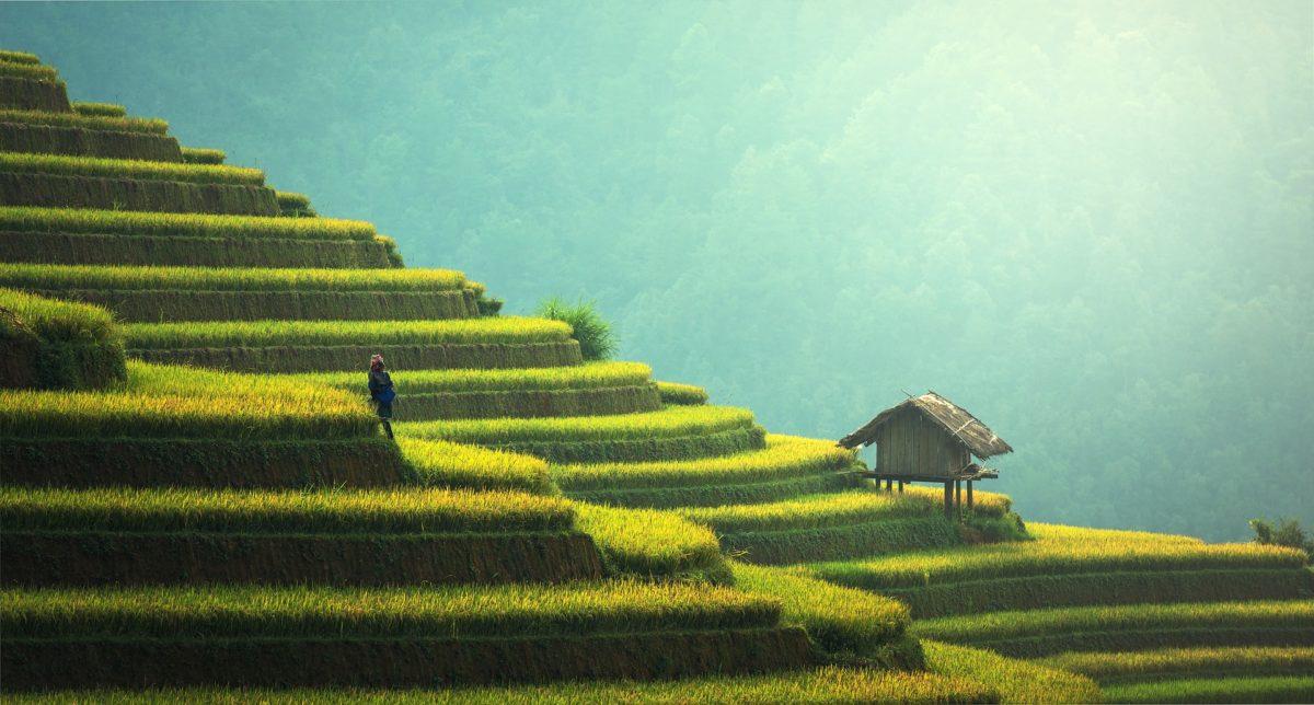 agriculture bio pixabay