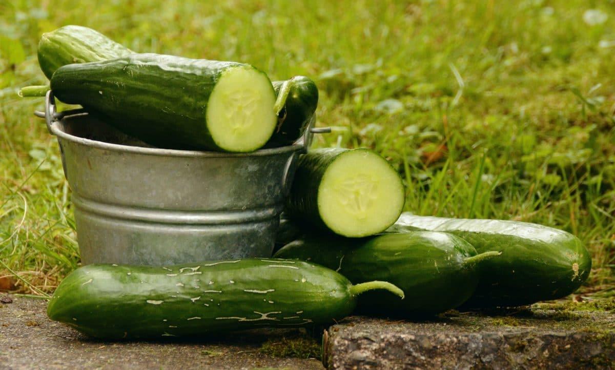 concombre-pixabay