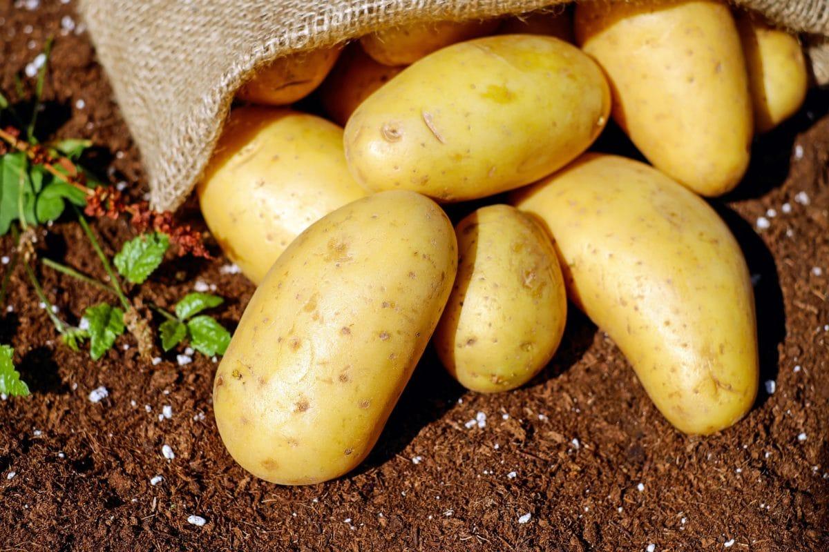 patates pixabay 2