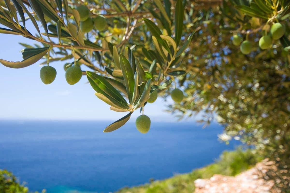 olives pixabay