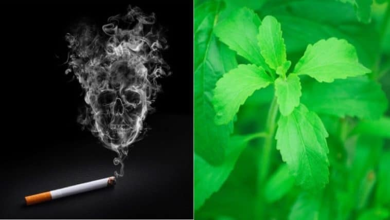tabac danger