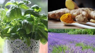 anti inflammatoires naturels