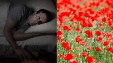 insomnies coquelicot