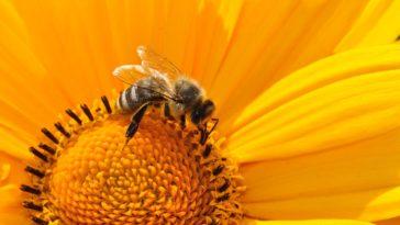 abeille ruche miel