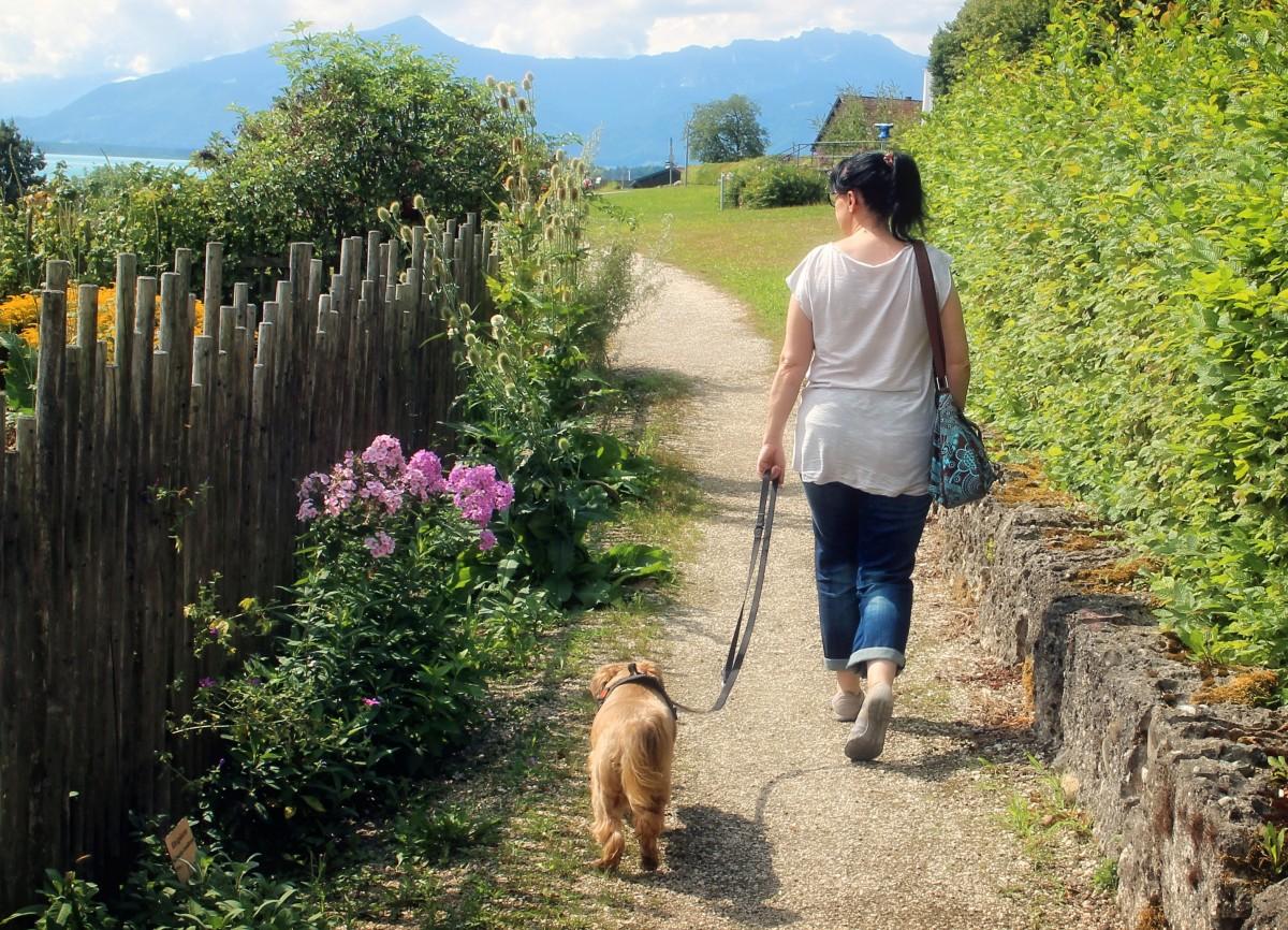 nature marcher chien