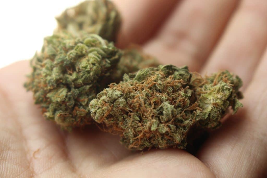 cannabis boutique Docteur Tamalou