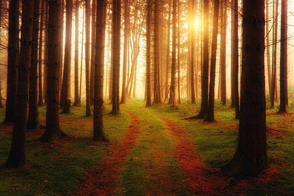 Sylvothérapie enfant arbre forêt