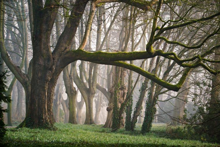Forêt-Sylvothérapie-Pixabay