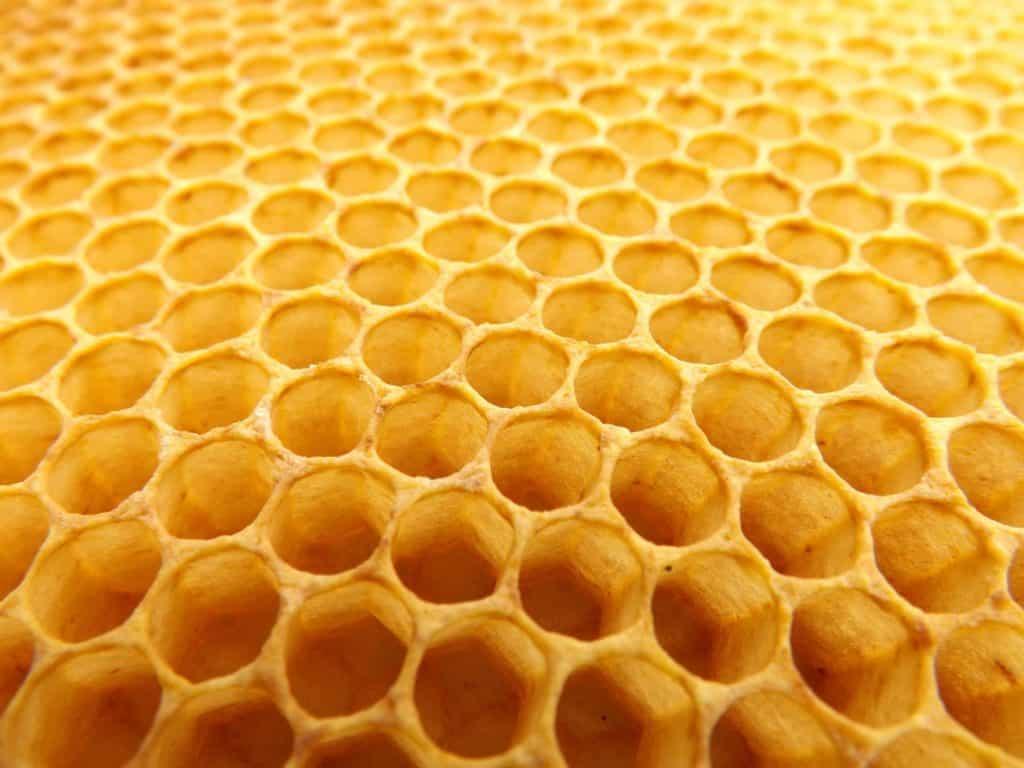 Trypophobie ruche Pixabay