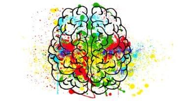 cerveau-personnalité-Pixabay