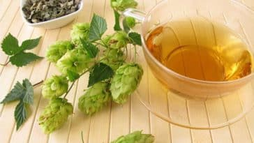 houblon tisane contre stress