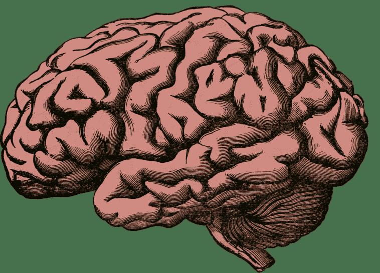 cerveau-Pixabay_holdentrils