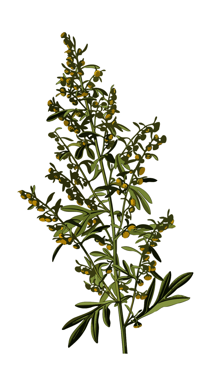 Armoise OpenClipart-Cectors Pixabay