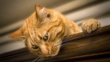 chat personalité Simone_ph / Pixabay