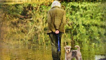 chien senior MabelAmber Pixabay