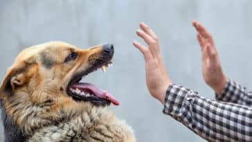 morsure-blessure-chien-féroce-méchant