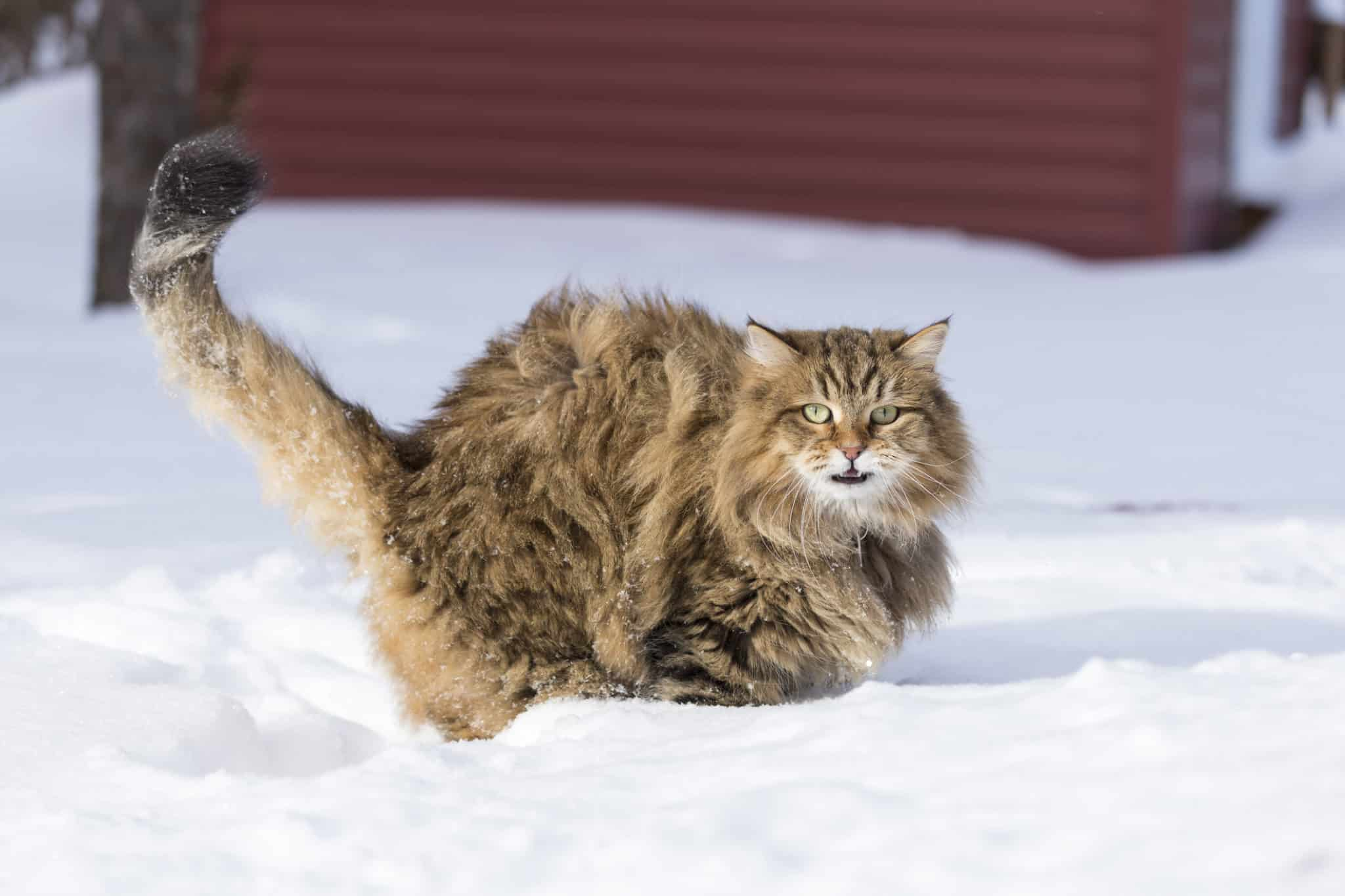 chat-neige-scaled