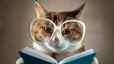 livre-lecture-cha