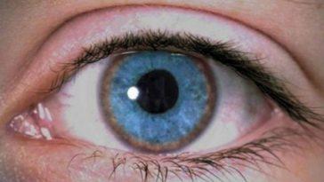 oeil-cuivre-wilson