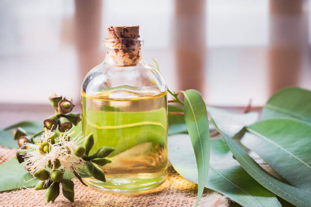 eucalyptus essential oil in bowl, with eucalyptus leaves on wooden background