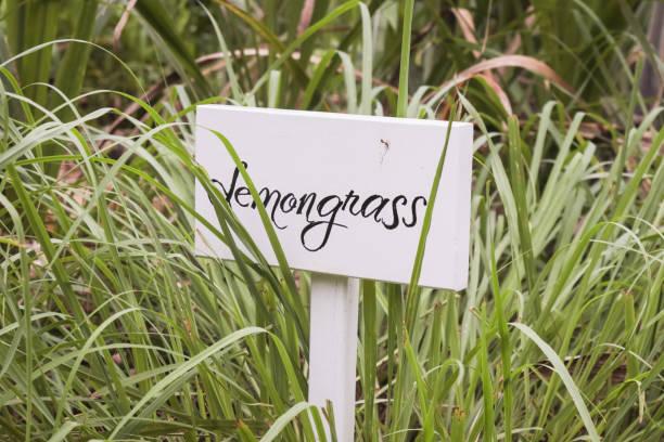 lemongrass bush with written sign