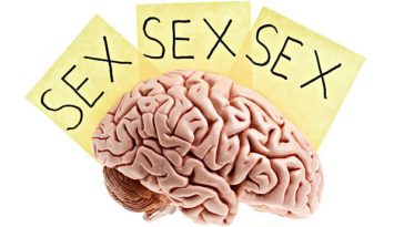 """A life size human brain with three notes saying """"sex"""" on a white background. Available in XXXLarge.PLEASE CLICK HERE FOR MORE BRAINS."""